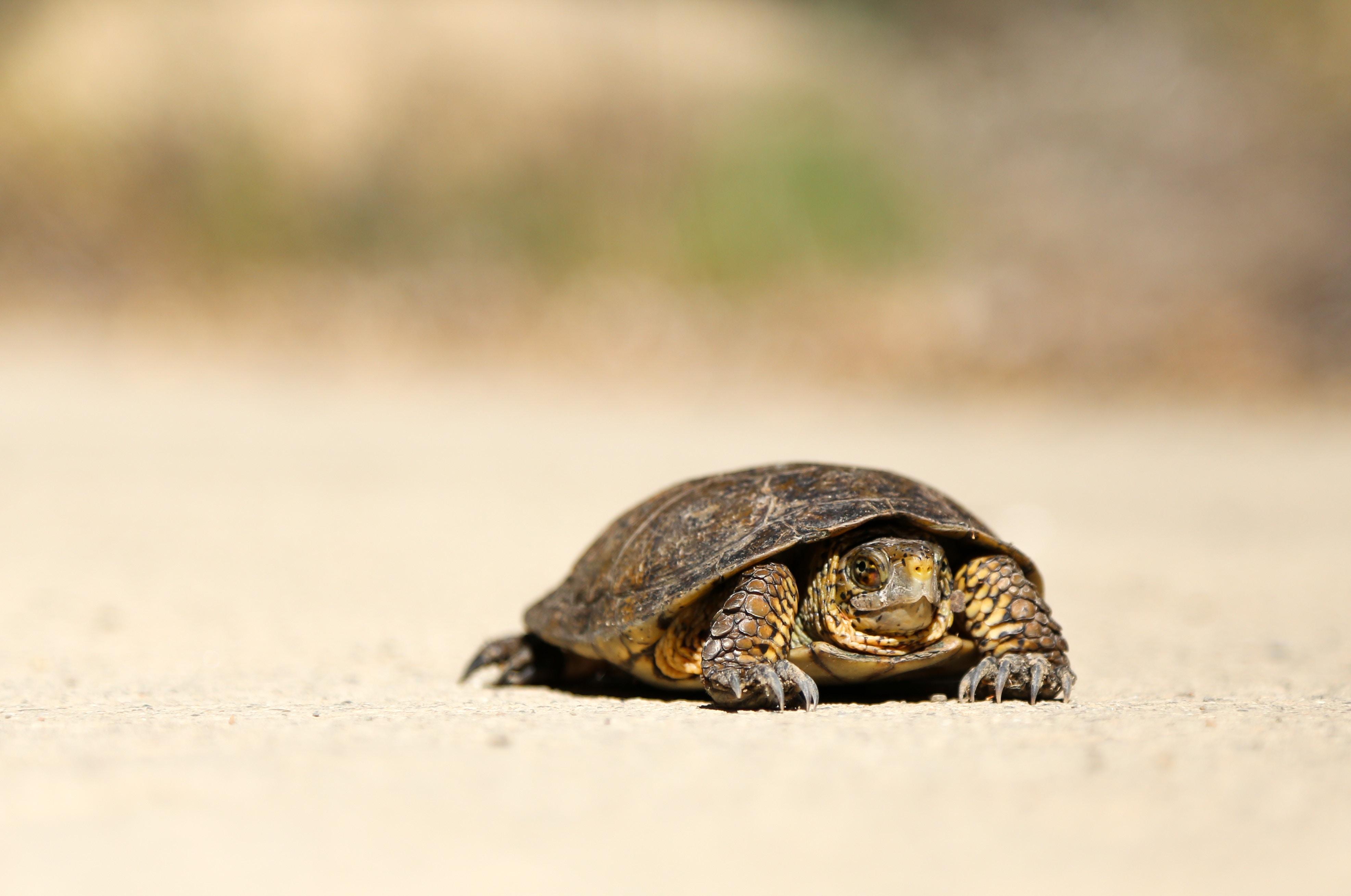 ゆっくり動く亀